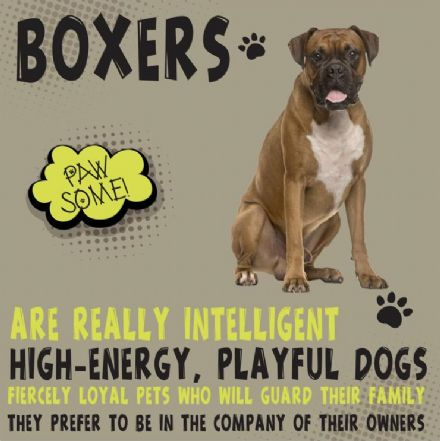 Boxers Metal Wall Sign